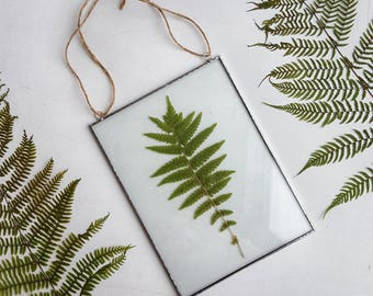 pressed fern frame pressed plants suspended between glass double sided glass frame gift - Double Sided Glass Frame
