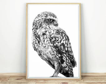 Owl Print - Black And White Art, Owl Poster, Burrowing Owl, Bird Art, Nursery Decor, Little Owl, Owl Wall Poster, Owl Decor, Printable Art