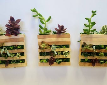 Succulent mini pallet | Small succulent planter with live plants | Fairy garden | Home and living | Summer plants | Magnetic Planter