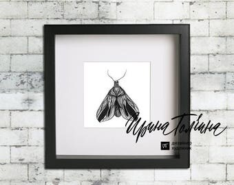 Moth. Graphics