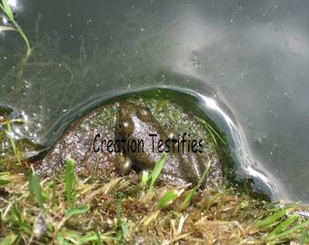 Nature Photograph - Frog