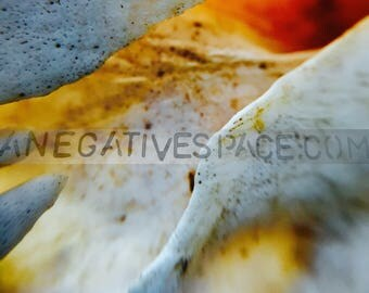 """GOLDEN VEIN--- original photo transferred to thin, lightweight metal 12""""x12"""" one of a kind no duplicates abstract wall art bone photo"""