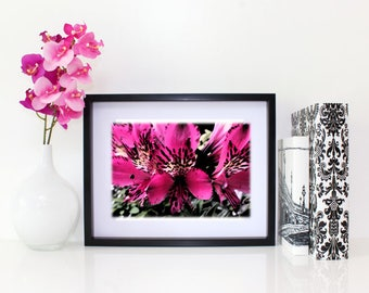 Splendid Beauty, Floral Photography, 6x8 matted print, wall art, matted photo, 6x4 print, Flower print, Flower Photo, Modern Art