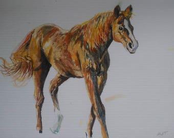 Chestnut Horse in Watercolour