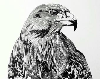Buzzard print from pen and ink original artwork