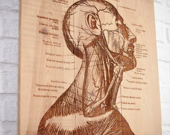 Recycled wood poster with anatomy engraving