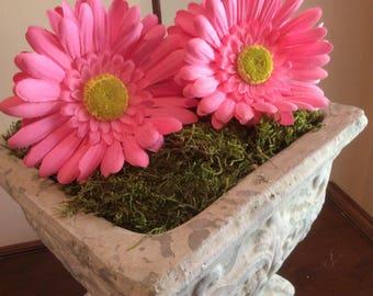 Light Pink Daisy Disney Ears (Gerbera)