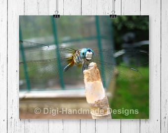 Dragonfly Fine Art Photography Print, Modern Photography, Insect Print, Spring and Summer Home Decor, Photography Art Poster, Macro Photo
