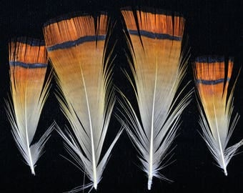 set of 6 feathers collar isabelle red Golden Pheasant, fishing fly, jewelry, scrapbooking