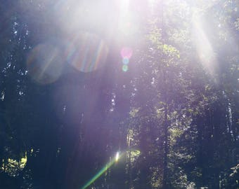 Sun through the Redwoods Downloadable Photography