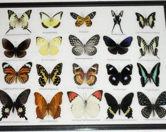 REAL 20 Butterflies Wall Decor Housewares Collectible TAXIDERMY Framed /BTF13U