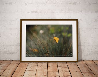 Metal Print -  Yellow Leaf, Photography - Metalic Aluminum Print, Fine Art, Wall Art, Nature Print, Home Decor, Photography
