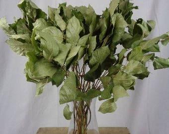 Dried Salal Bunch, dried greenery, greenery bundle, wedding bouquet, bulk greens, dried filler, preserved leaves, lemon leaf