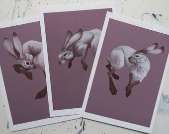 Floating jackrabbit series set - fine art prints
