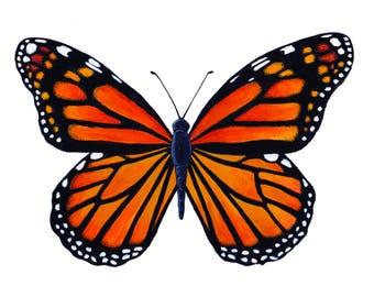 Monarch butterfly Giclee
