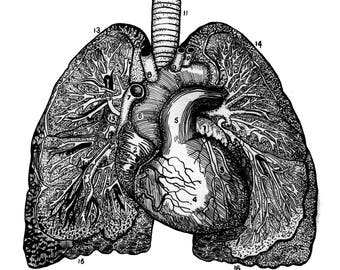 Anatomical Lungs Hand Drawn drawing/illustration print