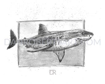100 Animals, 100 Days: 24/100 The Great White Shark DIGITAL FILE