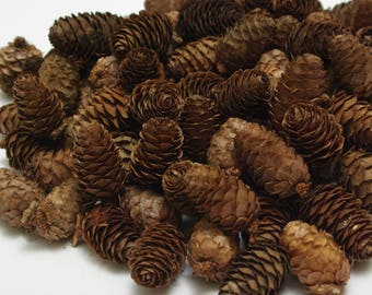 Larch cones 100 pcs, christmas wreath cones, dry natural cones, floristic decoration, wedding decoration, small cones, rustic craft cones #2