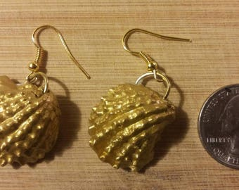 Real seashell. Rare quarter sized. Hand crafted earrings