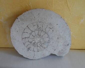BEAUTIFUL AMMONITE fossil 4.2 kg mollusk shell