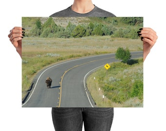 American West - Lone Buffalo, Printed Photograph, wildlife photography, travel photography, wall art, print
