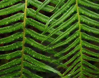 fern print, botanical print, fern wall art, fern, fern art, fern prints, fern art print, plant print