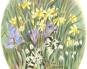 Springtime Daffodils - Original Watercolor Painting