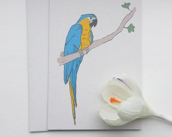 macaw - parrot - bird illustration - recycled greeting card