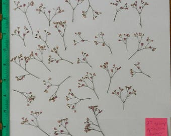 Real Pressed Dried Flowers 27 Stems of Tiny Pink Flowers of Coral Bell Ready for your project Craft supply