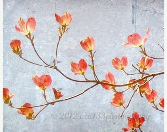 50% OFF SALE Floral Photography Large Wall Art - Pink Blue Flowering Branch Dogwood Traditional Spring - 20x20 inch Fine Art Photography Pri