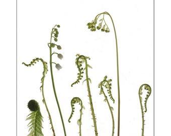 Fern Botanical Art Print, Scanner Art, Minimalist, X-Ray, Fern Wall Art