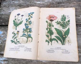 Vintage Antique 1900 French book  Le médecin des Pauvres/ natural recipes for deceases/Botanical plates
