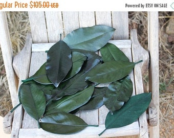 Save25% 300 Magnolia leaves preserved green - Gift wrapping-Party Favors-Wedding invitations
