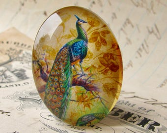 Perched Peacock, Beautiful Birds collection, glass oval cabochon, handmade cabochon in this shop, 40x30mm, peacock feather