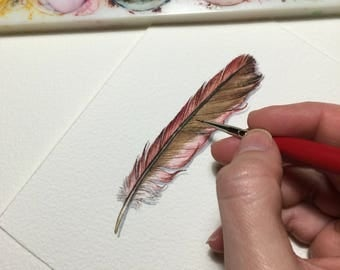 Cardinal feather study - Original Watercolour painting