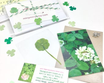 Real Genuine Five Leaf Clover Gift. Good Luck Charm Pressed Trifolium Repens White Clover Leaf Plant - The *Only* Officially Lucky Plant