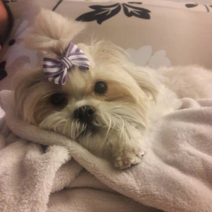 daisy patch shih tzu 6 large dog hair bows yorkie shih tzu maltese choose from 6997