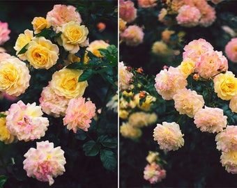 Rose Garden - Set of Two Photographs, Nature, Floral, wall art, room decor