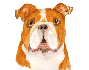 Bulldog art print, bull dog, house pet animal face mugshot picture, illustration, watercolor painting sketchbook art, mud room library decor