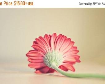"Nature Flower Photography Pink Gerber daisy Flower Photography ""she's so lovely"" fine art photography pink daisy Still life Photo Pink color"