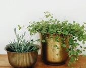 Set of 2 Brass Planters - Brass Plant Holder - Metal Plant Container - Brass Decor