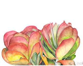 Flapjacks print of watercolor painting, FJ22417, A3 size, Flapjacks watercolor painting print, Succulent print, succulent watercolor