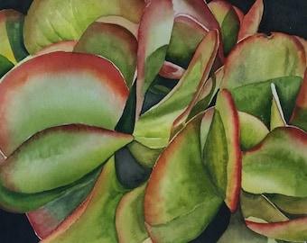 Succulent print on canvas