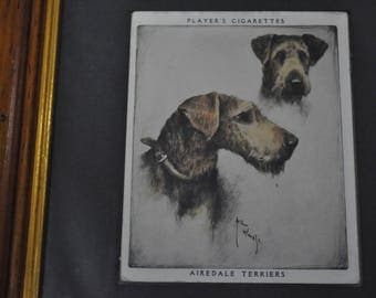 Vintage Framed Player's Cigarettes Card of Airedale Terriers