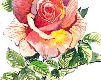 ACEO Limited Edition 1/25- Rose in May, Art print of an original watercolor, Small gift idea for her