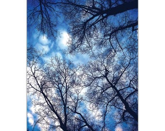 Landscape Photography 'Sky Vains' by Meirav Levy - Winter Scene Art Eclectic Trees Decor on Metal or Plexiglass