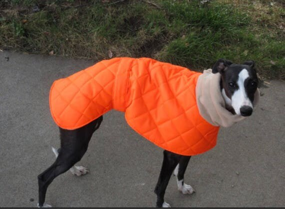 H'visibility whippet and greyhound winter coats