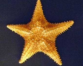 "Caribbean Bahama Starfish 6 - 7"" sea star ocean beach theme wedding decor"