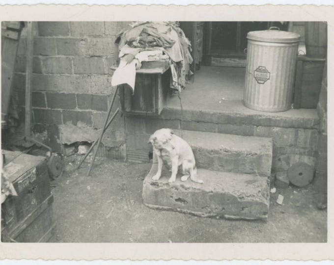 Dog on Steps, 1953, Alabama: Vintage Snapshot Photo (65467)