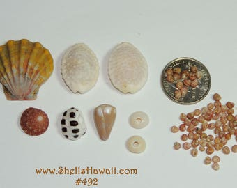 Mix Hawaiian seashells #492